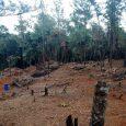 Detienen crimen ecológico en zona montañosa de Jarabacoa