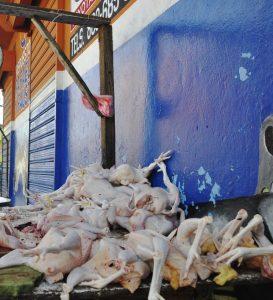 Productor pollos explica razón desabastecimiento