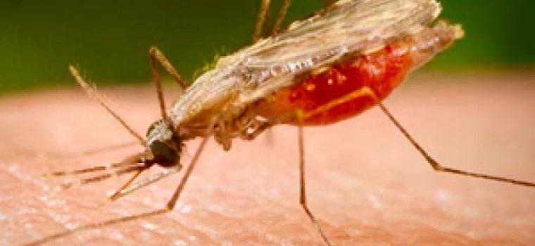 Factores favorecen la presencia de malaria en RD dice experto