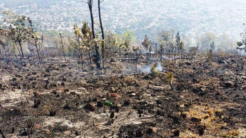 1,500 tareas de bosque afectada en loma de Guaiguí
